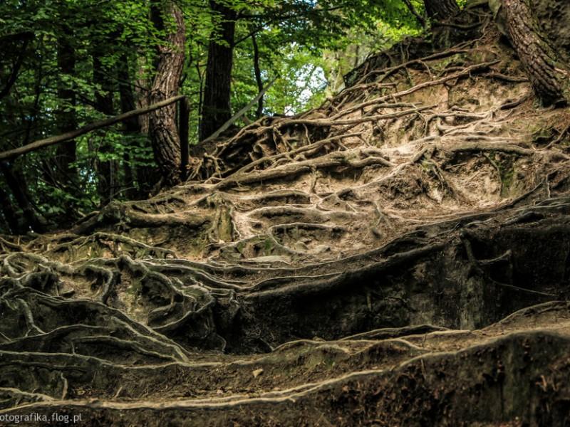 9196449_100814--rezerwat-przyrody-przadki--gmina-korczyna-